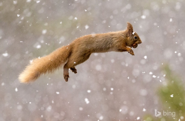 bing_squirrel